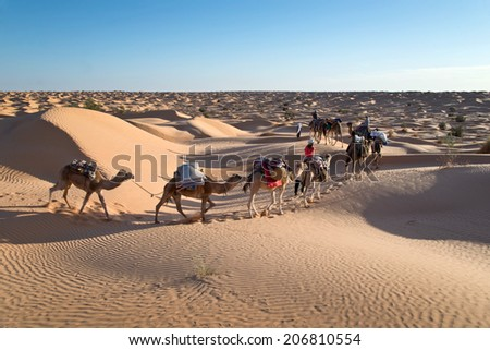 Caravan of camels in the Sand dunes desert of Sahara, South Tunisia - stock photo