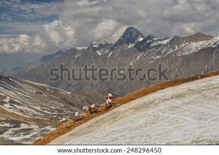 Caravan of donkeys in high altitudes of Himalayas mountains in Nepal - stock photo