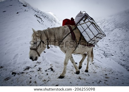 Caravan of mules for delivery in Nepal, Annapurna Conservation Area, Himalayas - stock photo