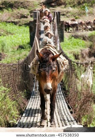 Caravan of mules on rope hanging suspension bridge in Nepal - stock photo