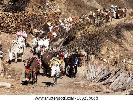 caravan of mules with goods - Western Nepal - stock photo