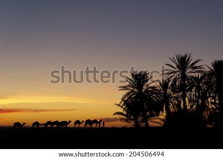 Caravan returning to the oasis during sunset - stock photo