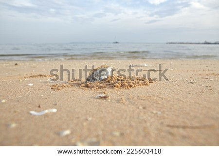 Carcasses of dead fish on the beach - stock photo
