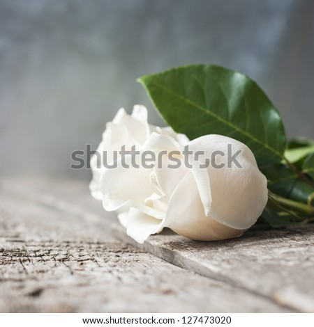 Card with White Roses on the Wooden Table - stock photo