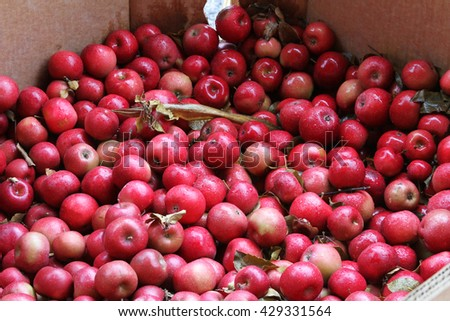 Cardboard box full of many colorful red apples - stock photo