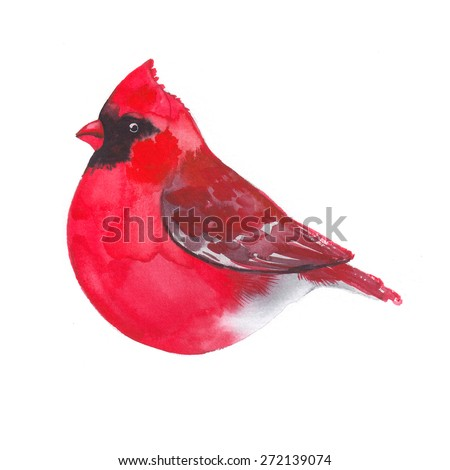 Cardinal. Bird painted on watercolor paper. Etude birds on a white background - stock photo