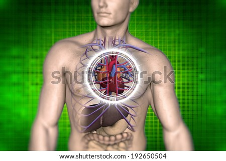 Cardio vascular system of the human anatomical vision - stock photo