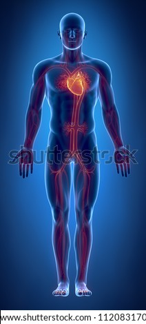 Cardiovascular system with glowing heart - stock photo
