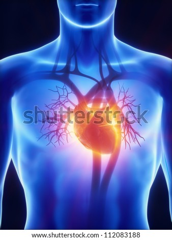 Cardiovascular system with glowing heart     **** Also as footage available in my portfolio - stock photo