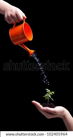 Care about the environment concept - small plant held in hand and watered - stock photo