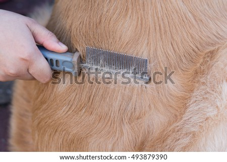 care for dog hair