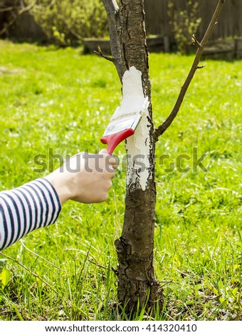Care for Fruit Trees in the spring. Hand with a brush paints a tree to protect it from harmful insects