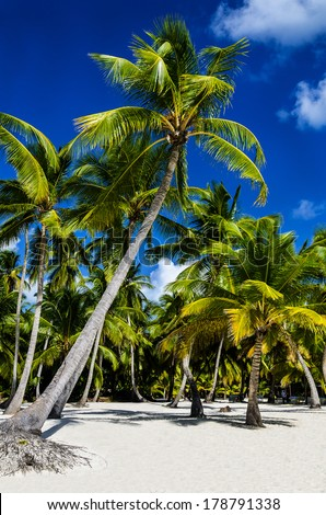 Caribbean beach with a lot of beautiful palms and white sand, Dominican Republic - stock photo