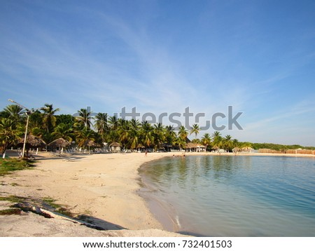 Caribbean Beach with blue sky, sand and coconut trees
