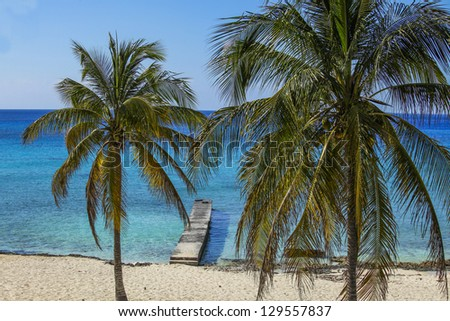 Caribbean beach  with palm trees
