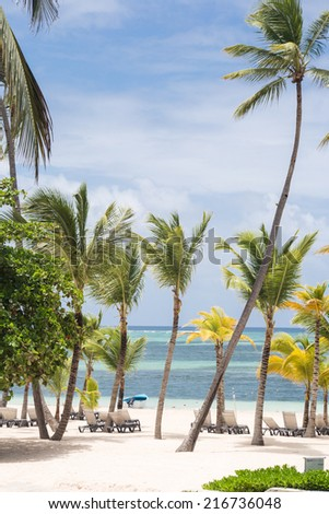 Caribbean beach with palm trees and sunbeds