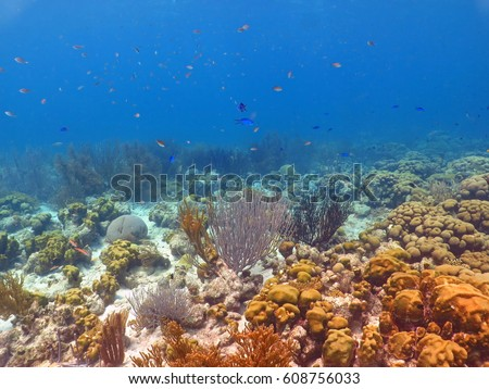 Caribbean colorful coral reef, hard and soft corals, fine white sand, variety of tropical different fish. Blue, grey and orange swimming fish. Calm tropical scene with rich coral seabed.