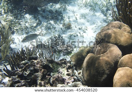 Caribbean coral reef home to many species of fish - stock photo