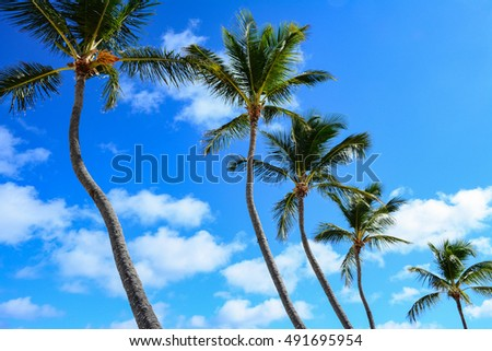 Caribbean palms against a sky with cloud and crystal sea water