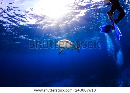 Caribbean reef shark under the surface with diver swimming without fear in Bahamas - stock photo