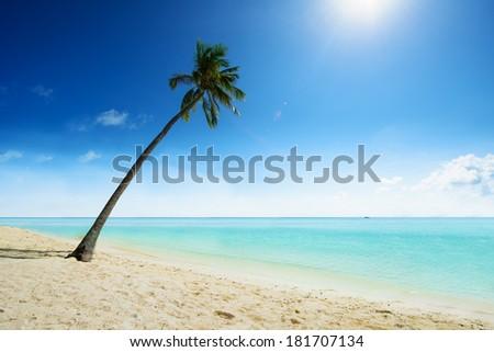 Caribbean sea and coconut palm - stock photo