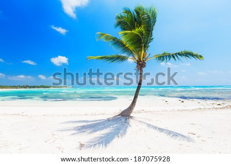 Caribbean sea and coconut palm - stock photo