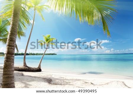 Caribbean sea and coconut palms - stock photo