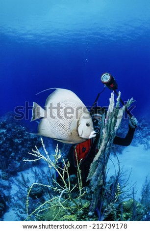 Caribbean Sea, Belize, a diver is photographing an Angel fish (Pomacanthus sp.) - - stock photo