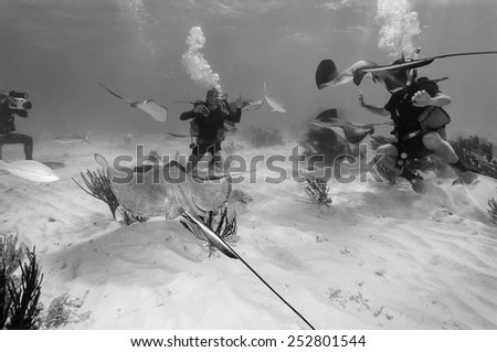 Caribbean Sea, Cayman Islands, Stingray City, divers and a stingrays - FILM SCAN - stock photo