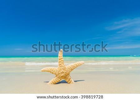 Caribbean starfish on the sandy  beach - stock photo