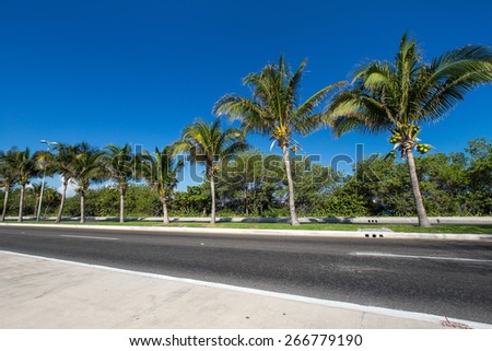 Caribbean street road with palm trees  - stock photo