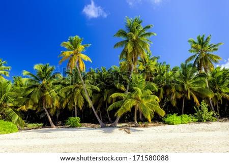 Caribbean wild beach, Punta Cana - stock photo