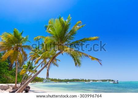 Caribbean wild nature scenery near the beach in Punta Cana - stock photo