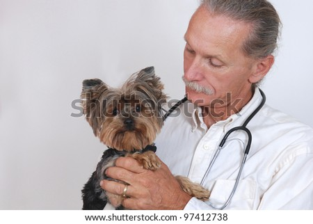 Caring veterinarian holding dog, Yorkshire Terrier - stock photo