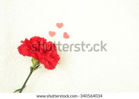 Carnation - stock photo