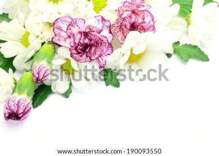 carnation and chrysanthemum - stock photo