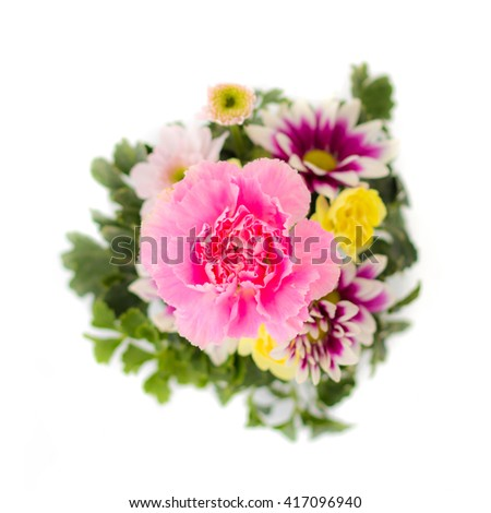 Carnation and chrysanthemum flower on white background.