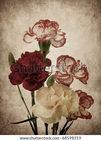 Carnation flowers textured - stock photo
