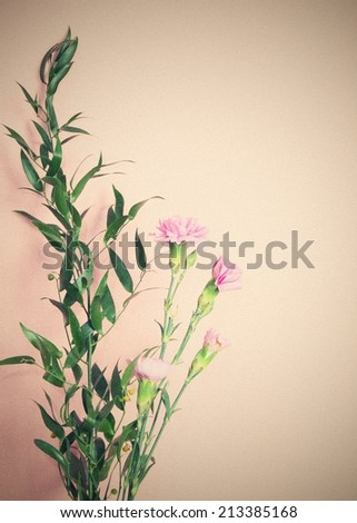 Carnation in vintage style, filtered - stock photo