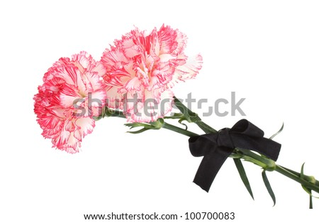 carnations and black ribbon isolated on white