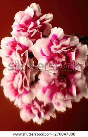 Carnations Reflection - stock photo