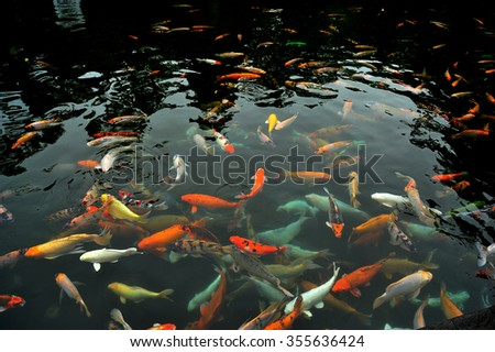 Carp Fish Group in the Pond - stock photo