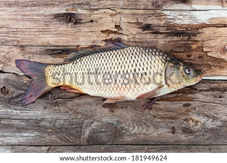 Carp fish over old wooden plank board - stock photo