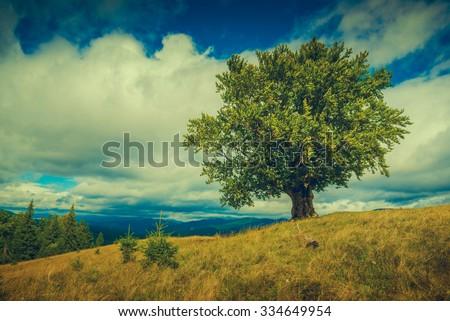 Carpathian meadow with lonely tree on autumn hill. Classical Ukrainian landscape. Cross process, vintage colors. - stock photo