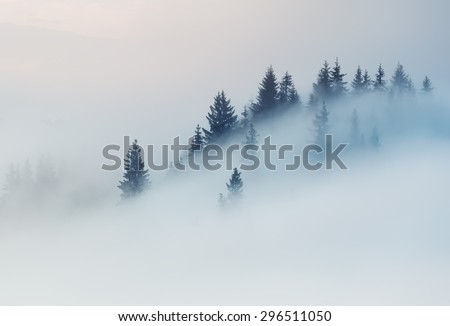 Carpathian Mountains. The tops of trees sticking out of the fog. - stock photo