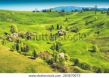 Carpathian village on a mountain hill, covered with fresh green grass