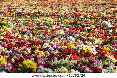 carpet from flowers at the monument