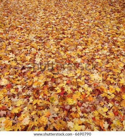 carpet of autumn leaves - stock photo