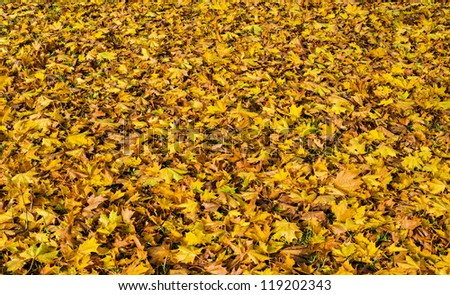 Carpet of autumnal leaves