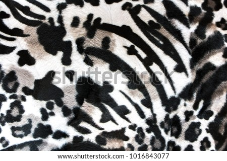 carpet Zebra texture for background. Black and white fabric of Zebra for texture abstract background. top view.